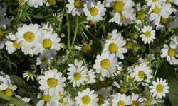 گزارش فارس از اجرايي نشدن ساخت دهكده و پايانه گل و گياه در جويبار