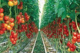 وام 100 میلیونی برای واحدهای تولیدی کشاورزی