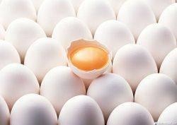 واردات تخم مرغ باعث كاهش قيمت آن در بازار مصرف نشد