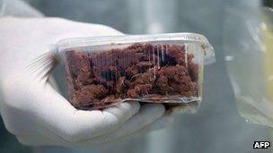 وزیر آلمانی: گوشت اسب باید بین فقرا تقسیم شود
