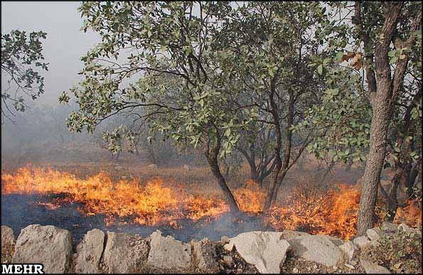آتش سوزی سریالی در جنگل های کهگیلویه و بویراحمد/ بلوط ها همچنان می سوزند