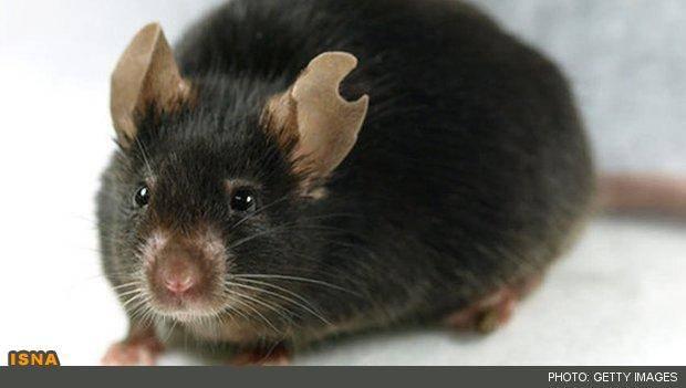 شبیهسازی موش از یک قطره خون!