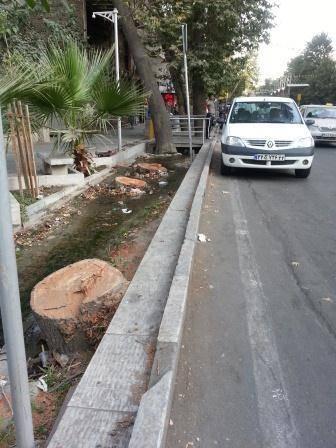 قتل درختان در خیابان ولی عصر تهران (عکس)