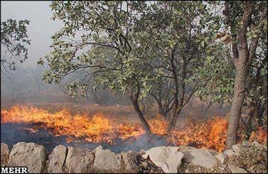آتش افروزی در جنگل های کرمان/ 40 هکتار از درختان کهنسال بنه خاکستر شد