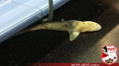 کوسه مرده در مترو نیویورک خبرساز شد (+عکس)