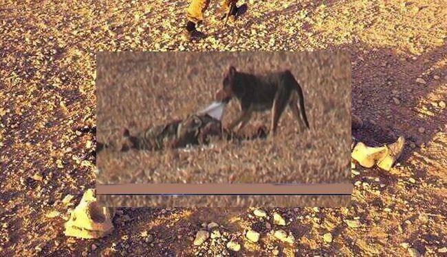 قربانیان النصره خوراک سگ می شوند/عکس