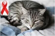 16:34 - نقش کلیدی گربهها برای مبارزه با ایدز