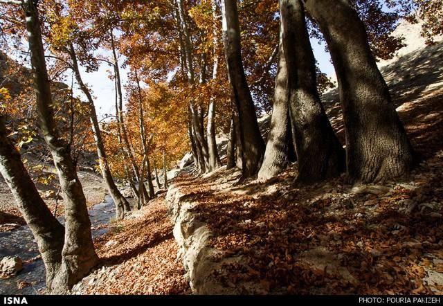 طبیعت پاییزی/تصاویر
