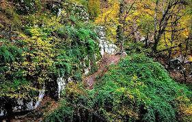 20:58 - عکاسی در جنگل های انگلیس