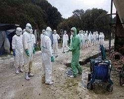آنفلوآنزای مرغی به فیروزکوه رسید/ ارزانی مرغ تا مهرماه