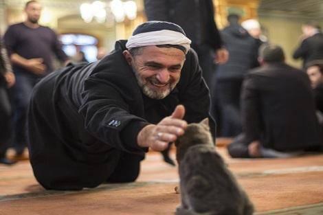 امام جماعت دوست گربه ها!+تصاویر