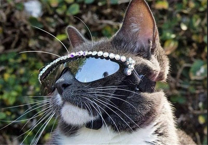 گربهای عجیب که «عینک دودی» میزند +تصاویر