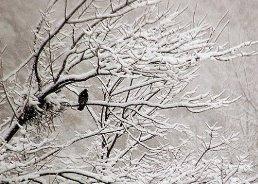 زمستان دوباره برمی گردد؛ لوازم گرمایشی را جمع نکنید