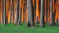 اسیدپاشی، این بار روی درختان