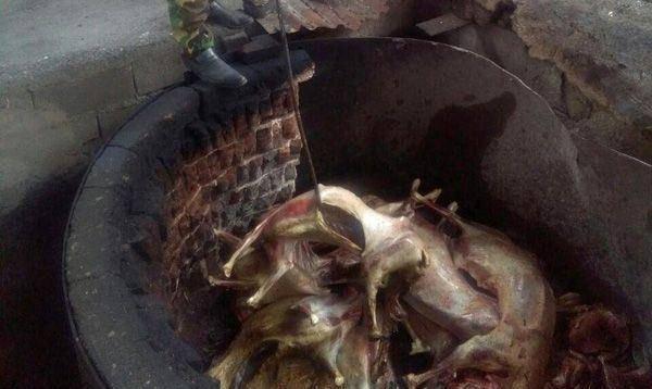 توزیع و فروش گوشتهای آلوده به تب برفکی +تصاویر