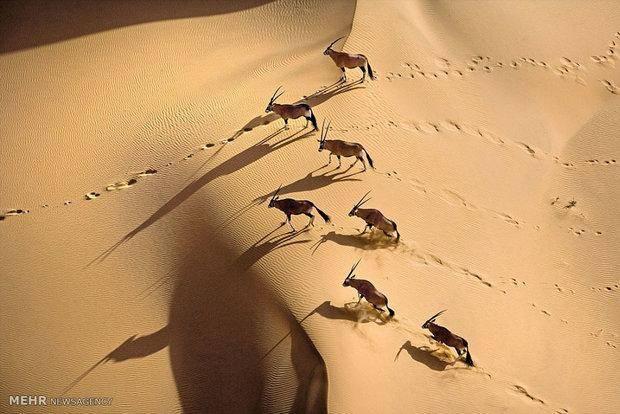 تصاویر هوایی حیات وحش آفریقا
