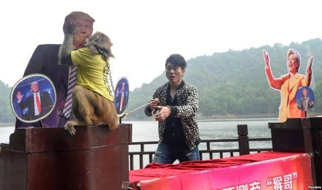 دلیل خبرساز شدن بوسه یک میمون به ترامپ (تصویر)