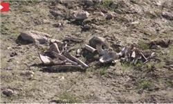 کشف جسد بیش از 1600 ایزدی در گورهای جمعی داعش