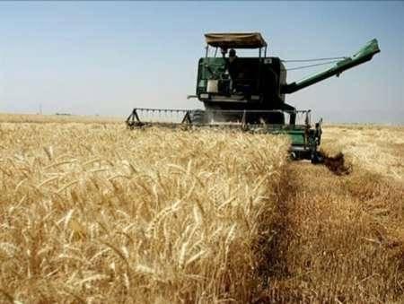 آغاز برداشت گندم از سطح بیش از 6هزار هکتار در ایرانشهر