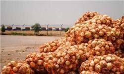 ماجرای پیازهایی که زیر آفتاب خوزستان دپو شد و گندید/ پیاز ۵ هزار تومانی را ۲۰ روز پیش کیلویی ۴۰۰ تومان هم از کشاورز نمیخریدند