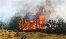 آتشسوزی در مراتع چلمکوه نکا همچنان ادامه دارد/ مراتع در حال خاکستر شدن/ تلاش نیروهای امدادی برای اطفای حریق