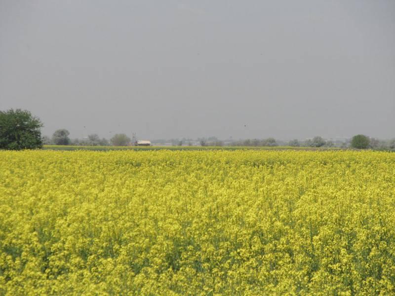 سهم آب کشت پائیزه محصول کلزا برای کشاورزان  قزوینی آماده توزیع است
