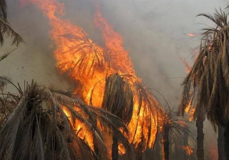 آتش سوزی نخلستان های گشت سراوان مهار شد