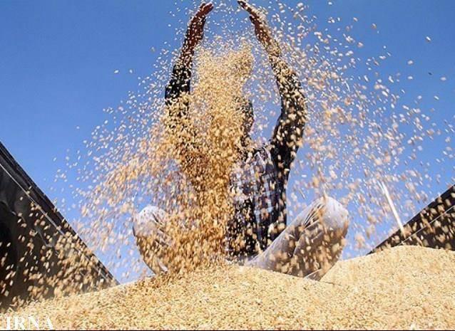 بخش دیگری از بهای گندم کشاورزان گلستان پرداخت شد