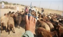 طاعون نشخوارکنندگان کوچک کنترل شد/ تلف شدن ۷۰ رأس علفخوار وحشی