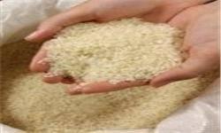 ۱۰۰ هزار تن برنج ویتنامی در راه ایران