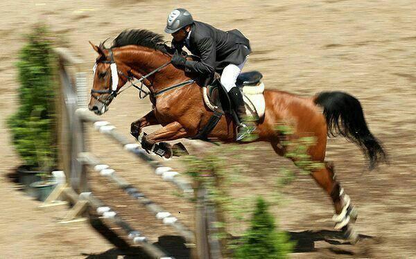 رقابتهای پرش با اسب قزوین برگزار شد