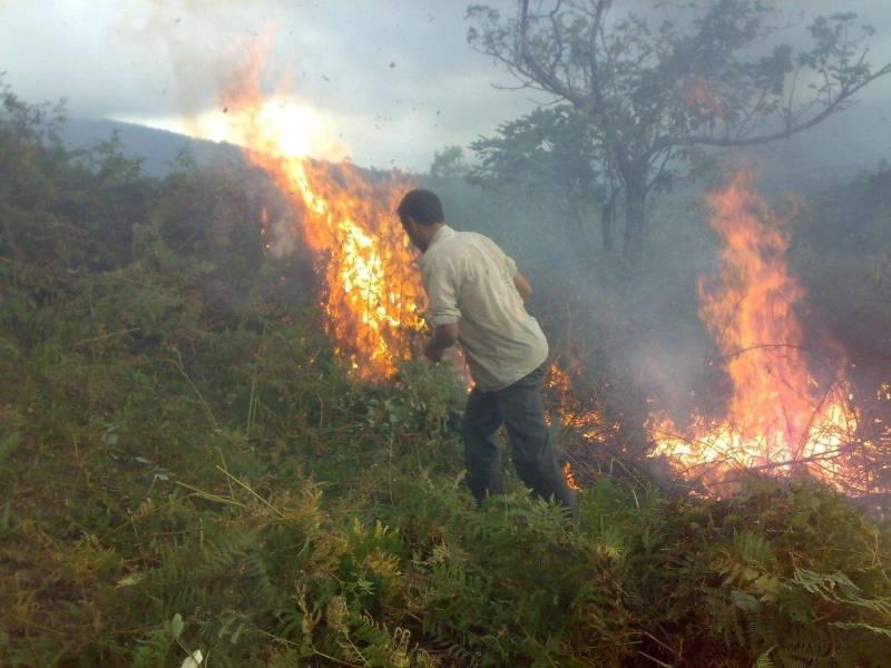 چهار هکتار از جنگلهای املش طعمه حریق شد