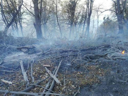 آتش سوزی در هشت نقطه جنگلی شرق گلستان مهار شد
