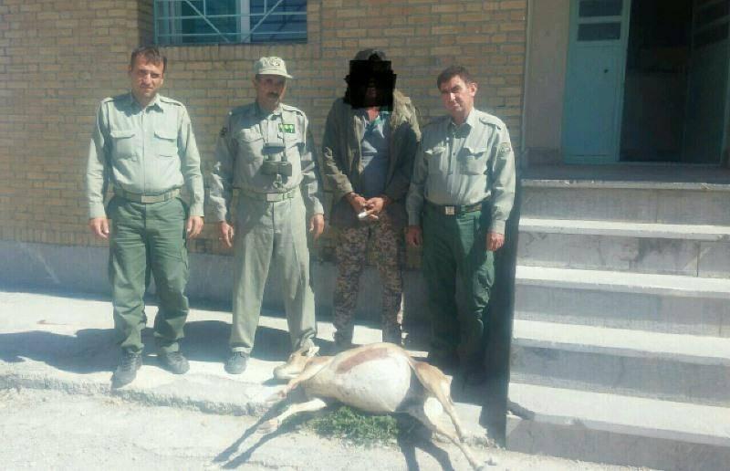 شکارچی میش وحشی در درگز دستگیر شد