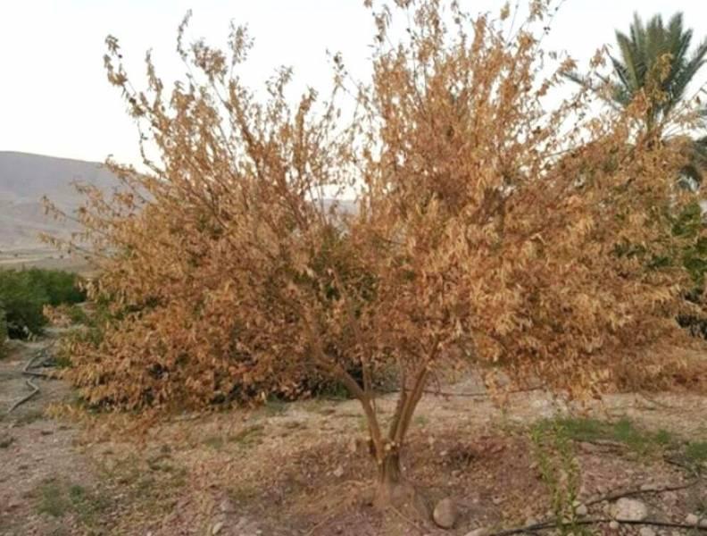 هنگامه خزان و  زوال در باغ های فارس