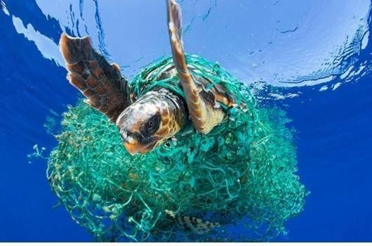 «فعال محیطزیست» کیست؟ کسی که پلاستیکبهدست میرود توی ساحل و جنگل، و آشغال جمع میکند؟ یا فردی که از خانه با خودش ظرف به بازار میبرد تا از پلاستیک استفاده نکند؟ یا آنکه دائماً به مردم درباره ی خطرات زیستمحیطی هشدار میدهد؟ اگر بدانیم بیشتر از۹۰درصد از زبالههایی که درمحیطزیست رها میشوند محصول فعالیت صنایع بزرگ است و نه افراد، احتمالاً الگویمان در مبارزه با آلودگی کره ی زمین تغییر میکند