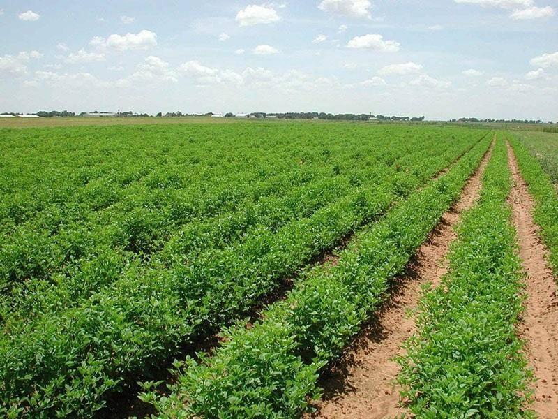 طبس در تولید سبزی و صیفی پیشرو است