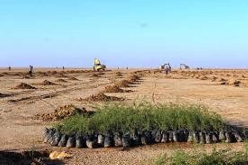 منطقه حفاظت شده شیراحمد سبزوار نهالکاری شد