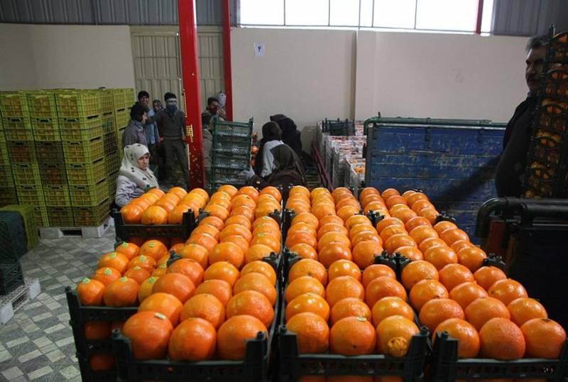 165 نقطه خراسان شمالی برای عرضه میوه شب عید در نظر گرفته شد