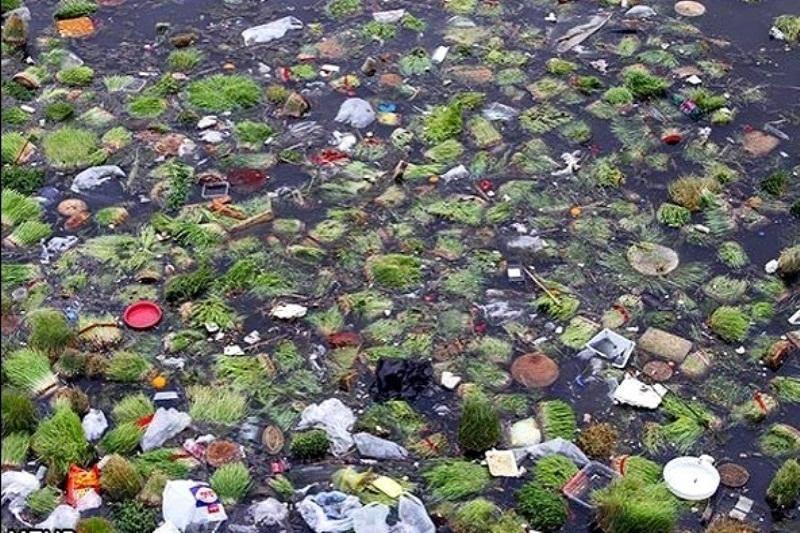 سبزه ها و ماهی های قرمز را در رودخانه ها رها نکنید