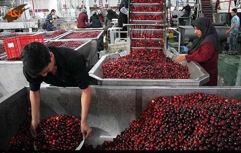 74 هزار تن مواد خام کشاورزی در شهرستان ری فرآوری شد