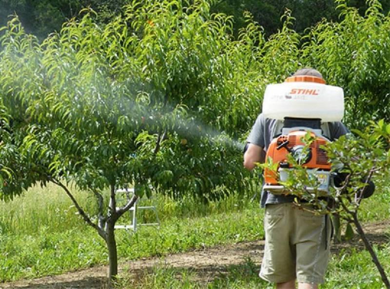 برخی باغ های شیروان بخاطر استفاده از سم دچار سوختگی شدند