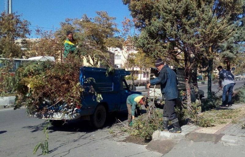 هرس درختان درگناوه با نظارت جدی شهرداری انجام می شود