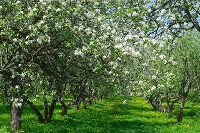 12هزار هکتار از باغهای زنجان بیمه شده اند