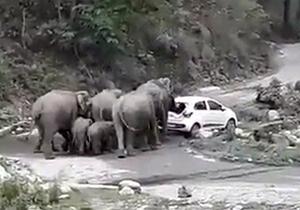 حمله فیلهای عصبانی به ماشینهای پارک شده در پارک ملی + فیلم