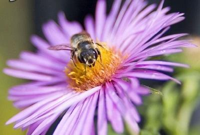زیستن حکایتی ست! چون آوازی هزاران رنگ با صدای هوشیوارِ زنبورهای مست یا چون لهجه ی غریب تنبور ست یا شادبانگِ مرغکی از دور ست یا چون شکوهِ شُرشُر باران، ترانه ی هماره ی شادابی ست زلال و بلند و پر طراوت و جاری ست