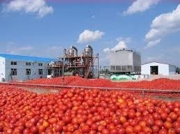 تولید رب 22 هزار تومانی با گوجه هزار تومانی