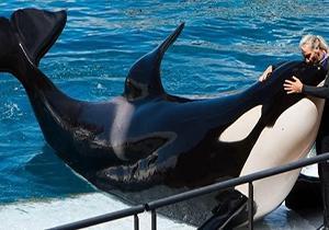 نهنگ قاتلی که حرف میزند! + فیلم